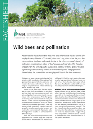 Wild bees and pollination