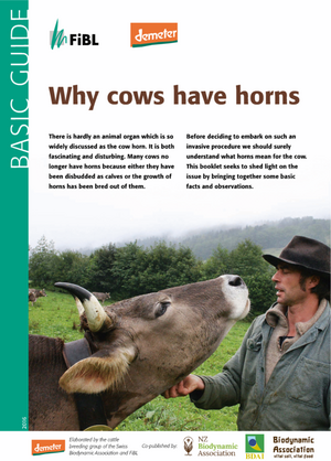 Why cows have horns