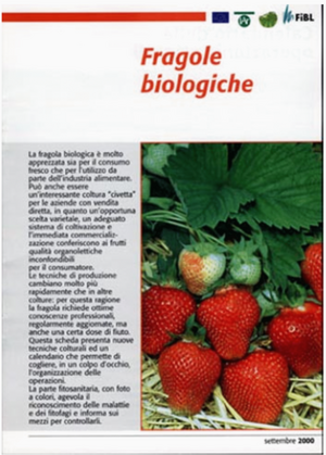 Fragole biologiche