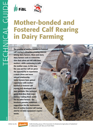 Mother-bonded and Fostered Calf Rearing in Dairy Farming