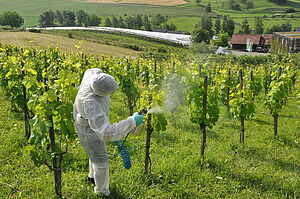 A person in a protective suit is spraying vines.