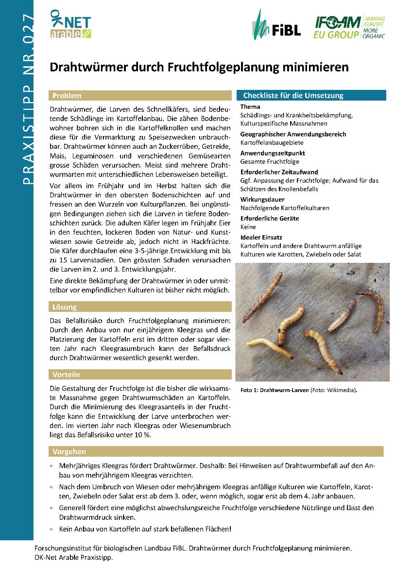 Drahtwürmer durch Fruchtfolgeplanung minimieren
