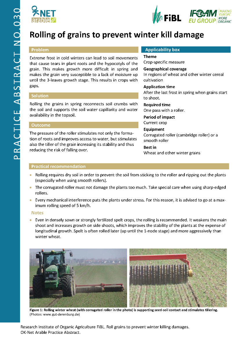 Cover: Rolling of grains to prevent winter kill damage