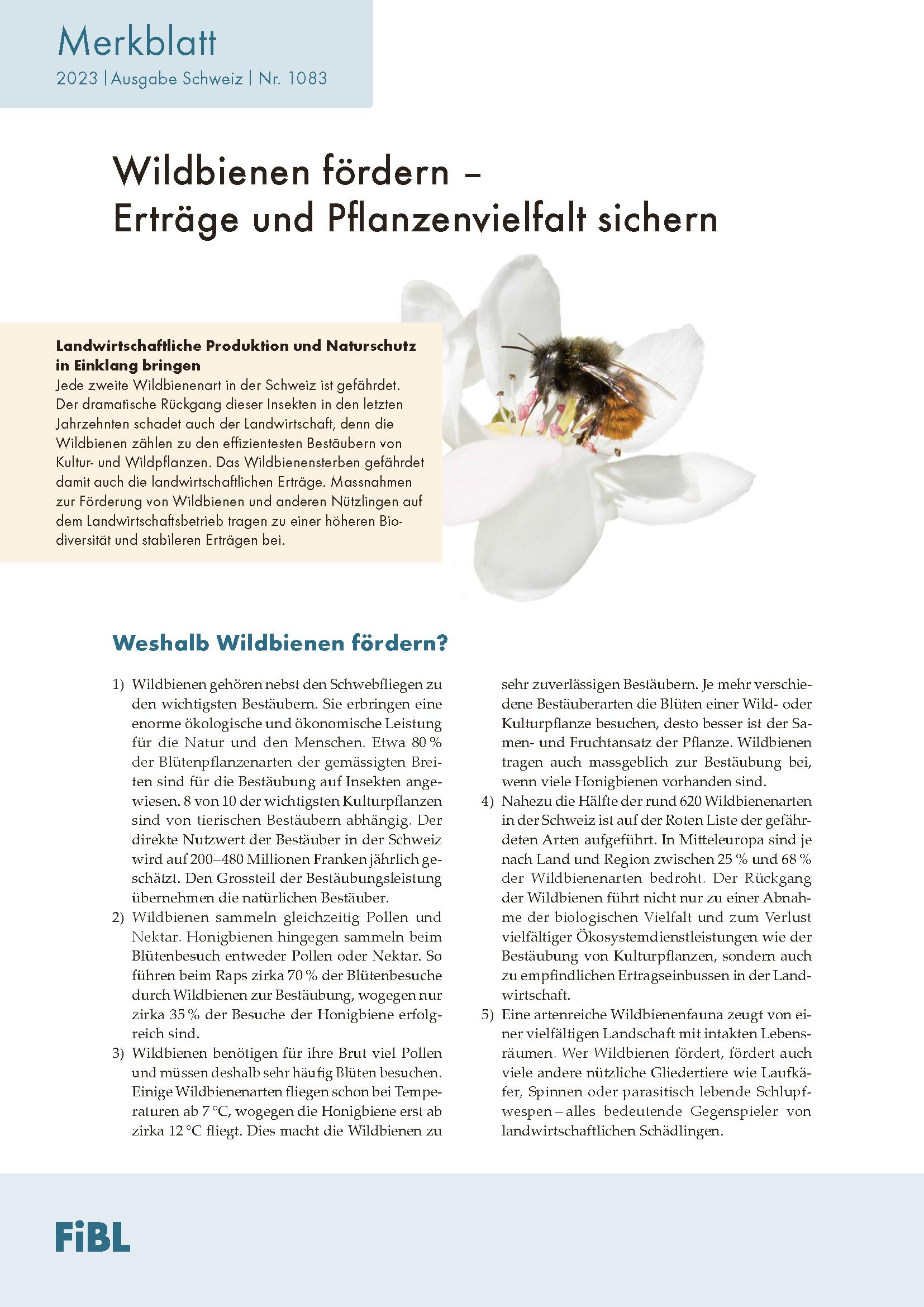 Wildbienen fördern – Erträge und Pflanzenvielfalt sichern