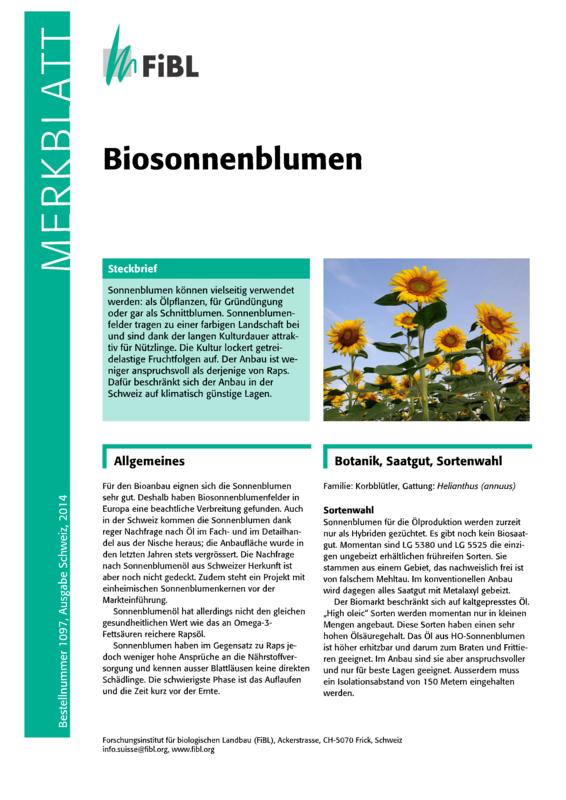 Biosonnenblumen