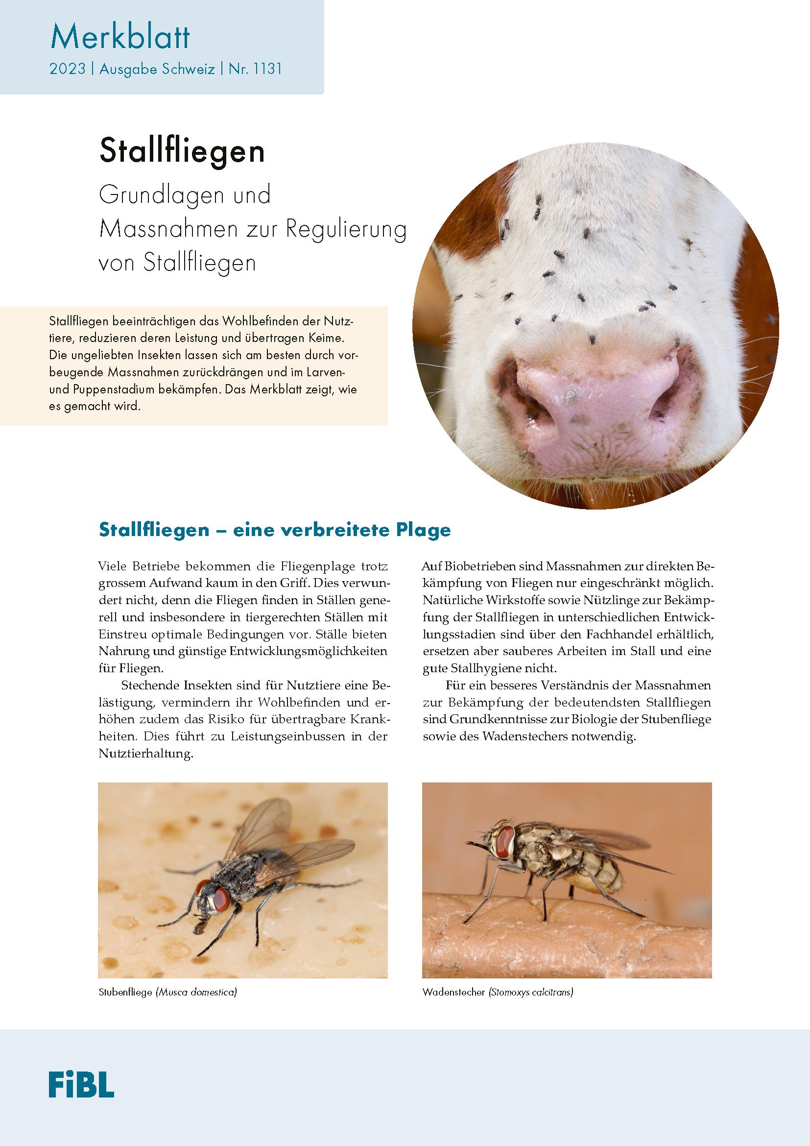Regulierung der Stallfliegen