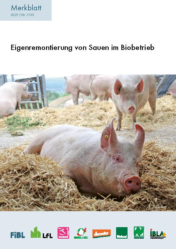 Eigenremontierung von Sauen im Biobetrieb