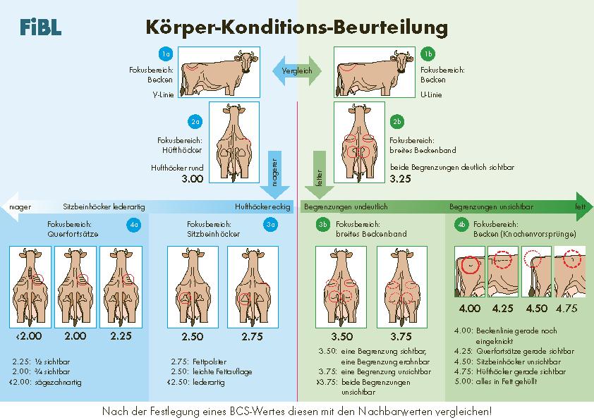 Anleitung zur Körper-Konditions-Beurteilung