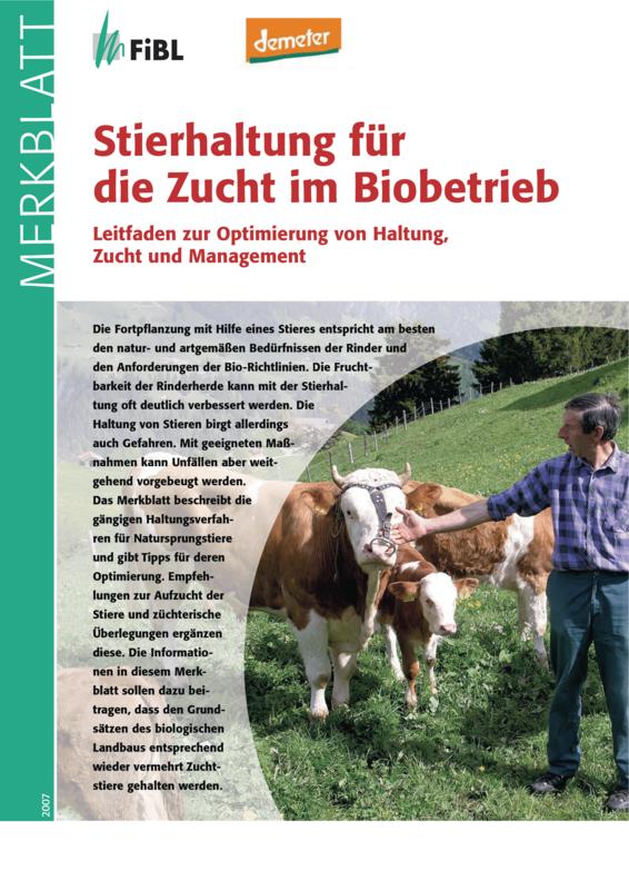 Stierhaltung für die Zucht im Biobetrieb