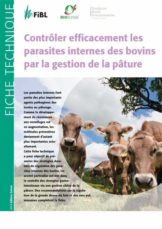 Contrôler efficacement les parasites internes des bovins par la gestion de la pâture