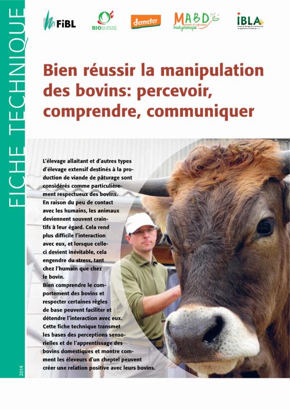 Bien réussir la manipulation des bovins: percevoir, comprendre, communiquer