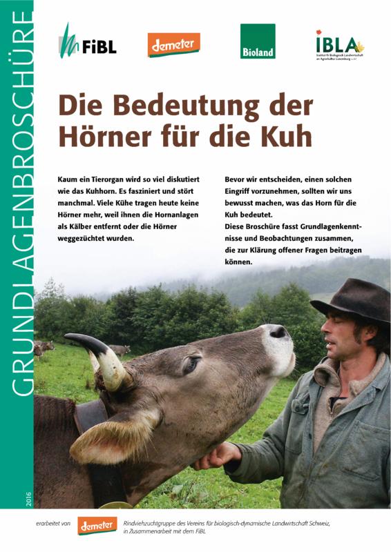 Die Bedeutung der Hörner für die Kuh