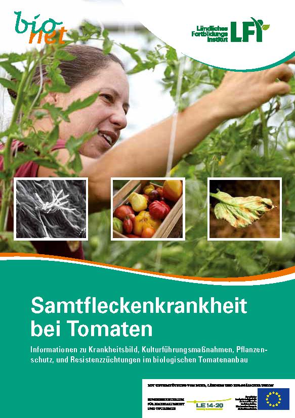 Samtfleckenkrankheit bei Tomaten