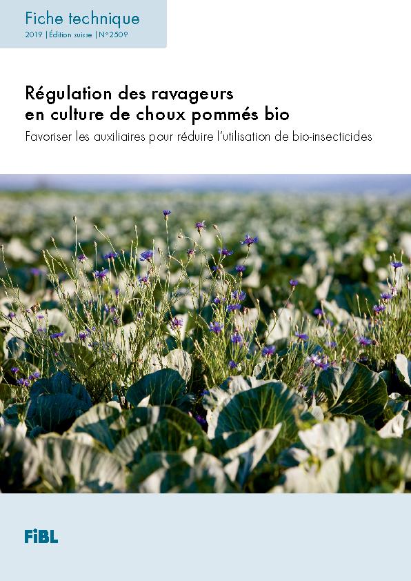 Régulation des ravageurs en culture de choux pommés bio