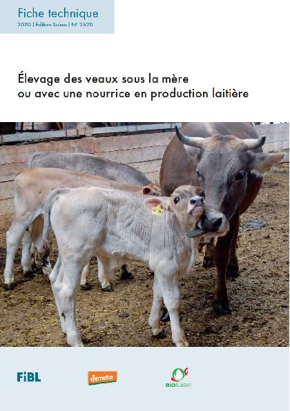 Élevage des veaux sous la mère ou avec une nourrice en production laitière