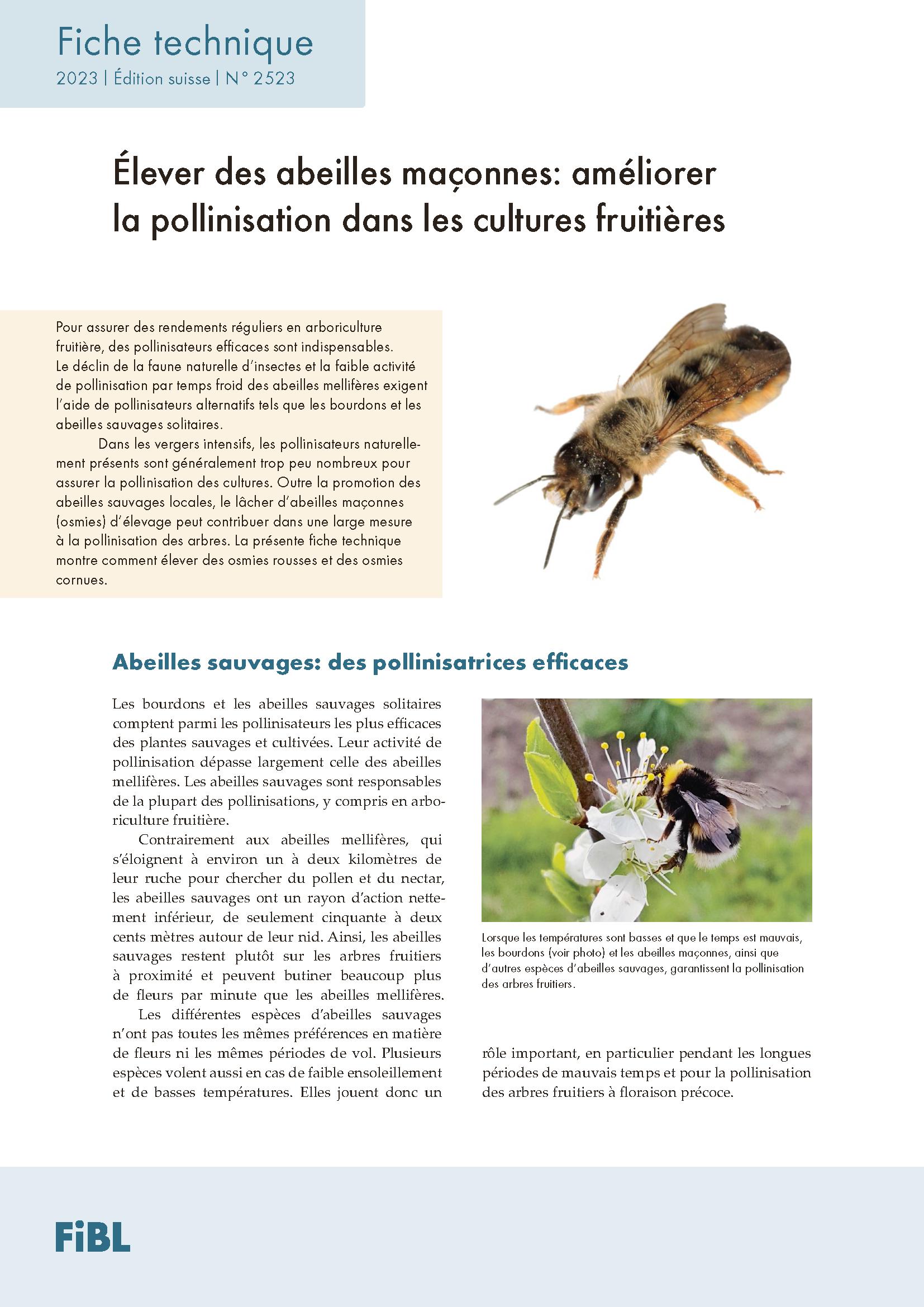 Les abeilles maçonnes, pollinisatrices efficaces