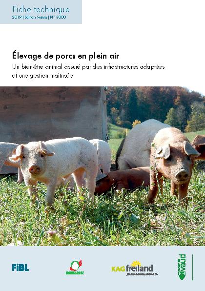 Élevage de porcs en plein air