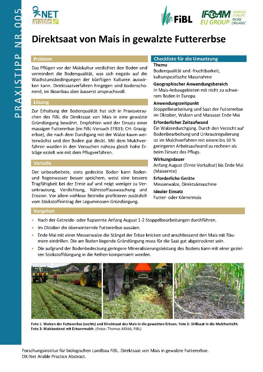 Direktsaat von Mais in gewalzte Futtererbse